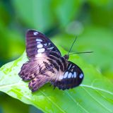 Butterfly resting on leaf Stock Images