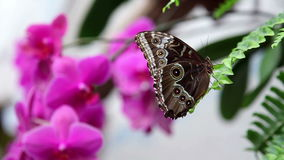 Butterfly resting on leaf of fern stock video footage