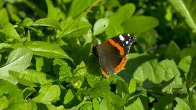 Butterfly resting on leaf. Butterfly resting on green leaf stock video footage