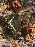 Butterfly. Resting in the leaves stock photos