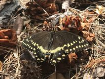 Butterfly. Resting in the leaves royalty free stock photo