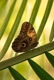 Butterfly. Resting on a palm leaf Stock Photo