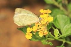 Butterfly 1. Butterfly resting on a park Stock Photo