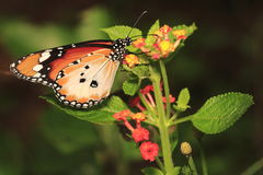 Butterfly 4. Butterfly resting on a park Royalty Free Stock Photos