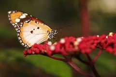 Butterfly 12. Butterfly resting on a park Stock Photo