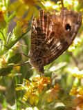 Butterfly resting. Butterfly among plants of campaign Royalty Free Stock Image