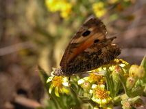 Butterfly resting. Butterfly among plants of campaign Stock Photography