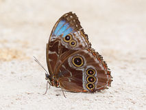 Butterfly resting in sand Stock Photos