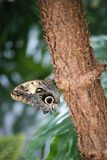 Butterfly resting on a tree Stock Photography