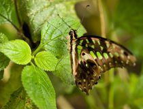 Butterfly resting on tropical leaf Stock Photos
