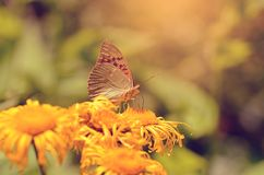 Butterfly resting on wildflower a sunny day Stock Images