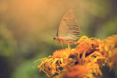 Butterfly resting on wildflower a sunny day Royalty Free Stock Images