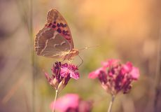 Butterfly resting on wildflower a sunny day Stock Photos
