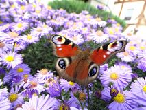 Butterfly rests on flower stock photos