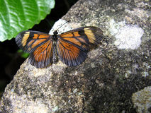 Butterfly on rock. Closeup of an orange and yellow butterfly with opened wings, sunning on a rock royalty free stock photos