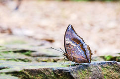Butterfly on a rock Royalty Free Stock Images