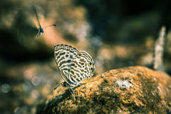 Butterfly on a rock Stock Image