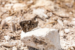 Butterfly on rock Stock Image