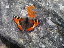 Butterfly on a Rock Royalty Free Stock Photography