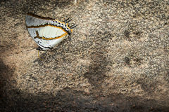 Butterfly on the rock in natural Stock Image
