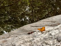 Butterfly on the rock and the reflection of tree in  the waterfall Stock Photos