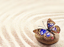 Butterfly on a rock of sand with circles Stock Photo