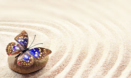 Butterfly on a rock of sand with circles Stock Photos
