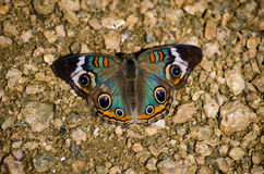Butterfly and rocks royalty free stock images