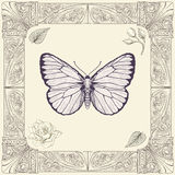 Butterfly and rose drawing. Hand drawing butterfly rose buds and leaves with decorative frame vintage engraving style Stock Photography