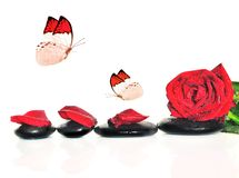 Butterfly, rose, petals and wet stones. Spa concept. Butterfly Hebomoia Glausippe rose, petals and wet stones. Spa concept Stock Photo