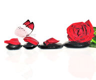 Butterfly, rose, petals and wet stones. Spa concept. Stock Photos