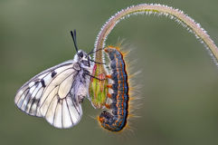 Butterfly`s community Royalty Free Stock Images