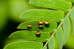 Butterfly's egg on green leaf stock photos