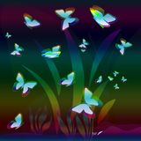 Butterfly's Night Royalty Free Stock Photo