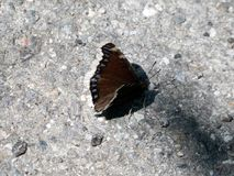 The butterfly and it`s road. A butterfly on a road Royalty Free Stock Photos