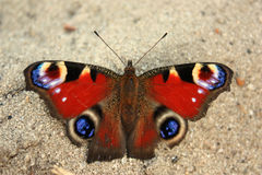 Butterfly in the sand Royalty Free Stock Images