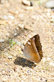 Butterfly on a sand Royalty Free Stock Images