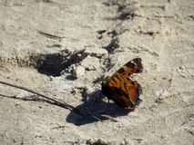 Butterfly on the sand stock images