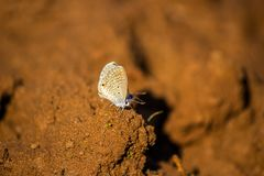 Butterfly and sand royalty free stock photography
