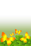 Butterfly scroll background Royalty Free Stock Images