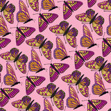 Butterfly seamless background. Abstract fsummer seamless pattern. Tropical background Royalty Free Stock Images