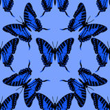 Butterfly seamless background Royalty Free Stock Image