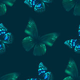 Butterfly seamless 00 black Royalty Free Stock Image