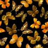 Butterfly seamless black Stock Photos
