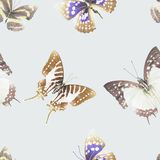 Butterfly seamless 06 lith Stock Photo