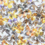 Butterfly seamless 07 lith Royalty Free Stock Photos