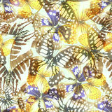 Butterfly seamless lith Stock Image
