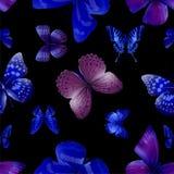 Butterfly seamless 04 nith Stock Photos