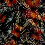 Butterfly seamless nith Royalty Free Stock Image