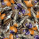 Butterfly seamless Royalty Free Stock Images